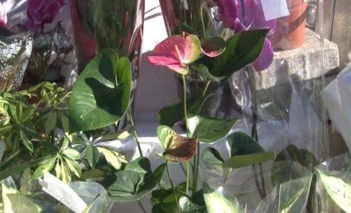 Najlepši cvetni aranžmani za dame povodom 08. marta