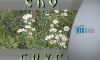 EkoBrus – za čistiju Rasinu i jezero Ćelije (emisija br.8)