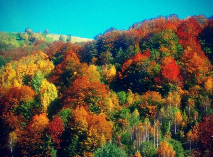 Brusko selo – zalog za budućnost 18: Belo Polje, Bozoljin, Boranci, Vitoše