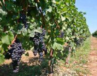 Brusko selo – zalog za budućnost 25: Plodna dolina Župe