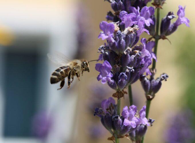 Brusko selo – zalog za budućnost 26: Pčelarstvo kao razvojna šansa opštine Brus