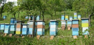 Zahtevi za podsticaje u pčelarstvu do 31. maja