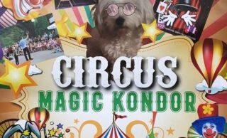 Predstava cirkusa Magic Kondor u Centru za kulturu Brus