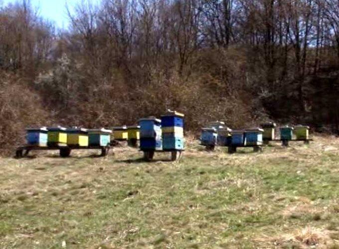 Pripreme za uspešno zimovanje pčela